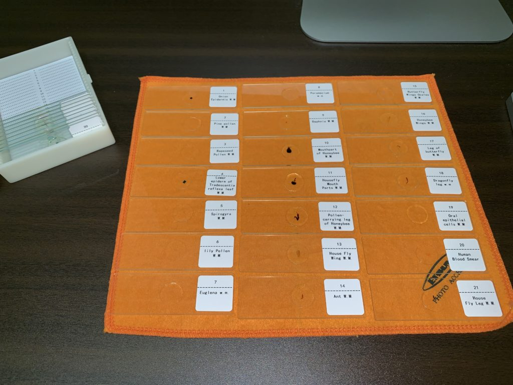 MAXLAPTER 顕微鏡 小学生 夏休み 自由研究 課題 プレパラート試料 ネタ作り 簡単