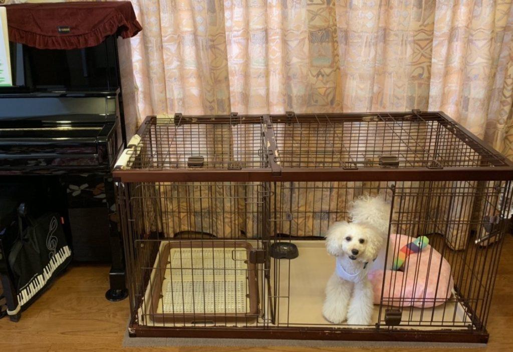 ピアノ 犬 ワンちゃん 同室 大丈夫 問題ない トイ・プードル ケージ